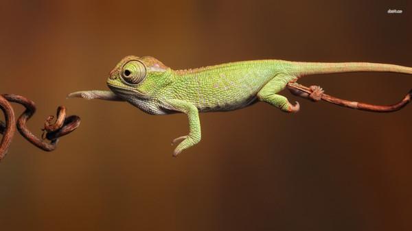 CyanogenMod-teman kan göra din mobil till en kameleont